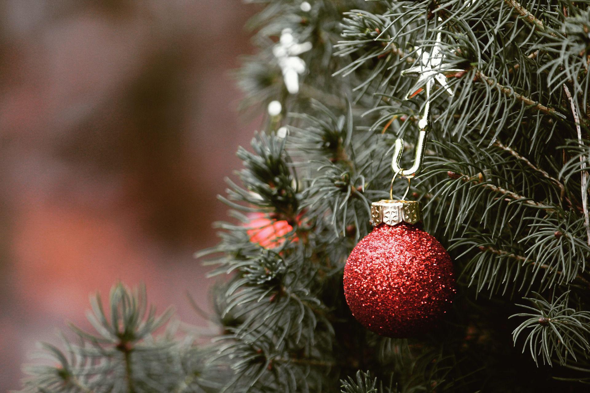 Wypożyczalnia choinek, czyli eko rozwiązanie na Święta