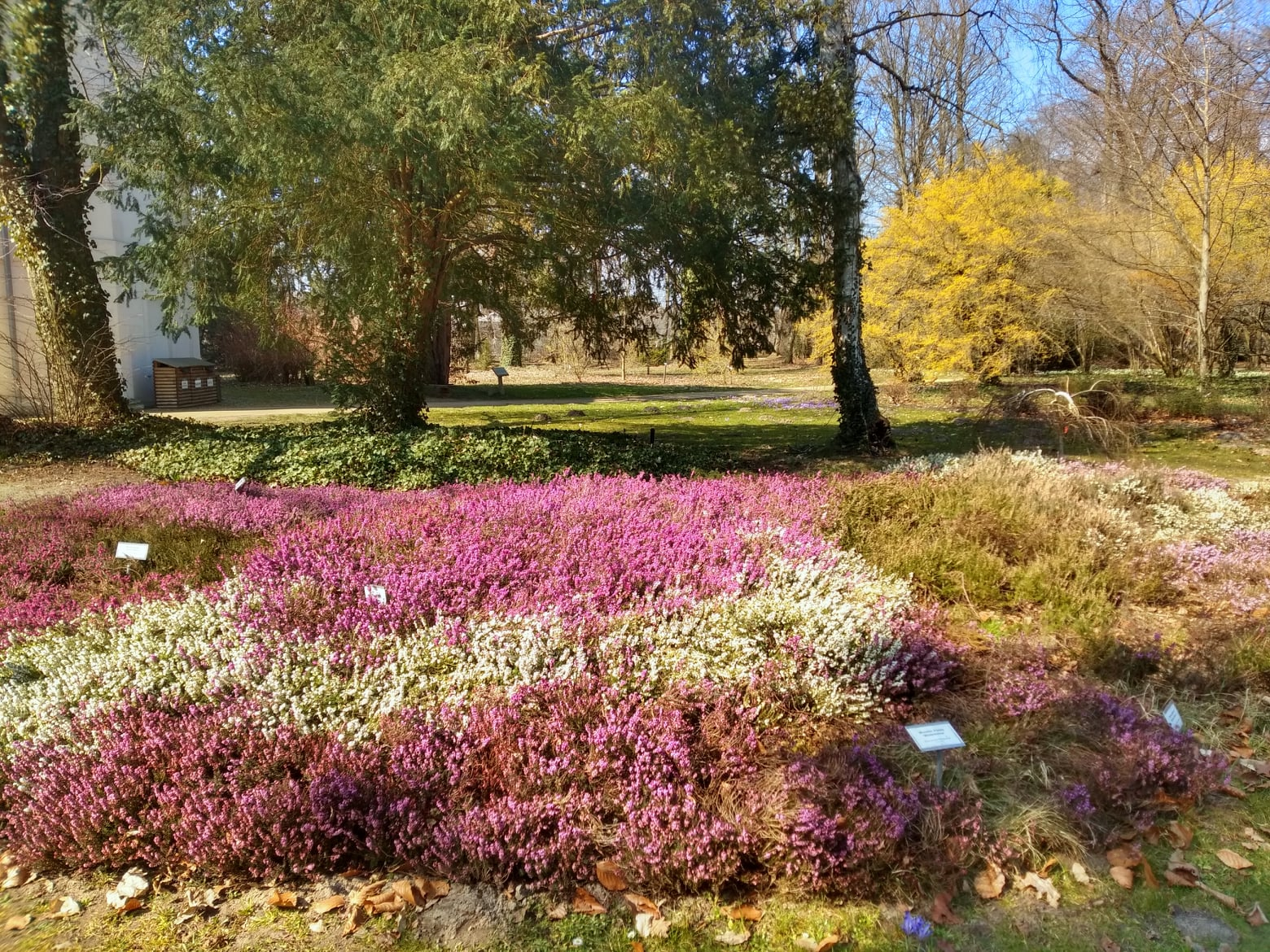 Wiosna w Arboretum Kórnickim. Kwitnie coraz więcej roślin