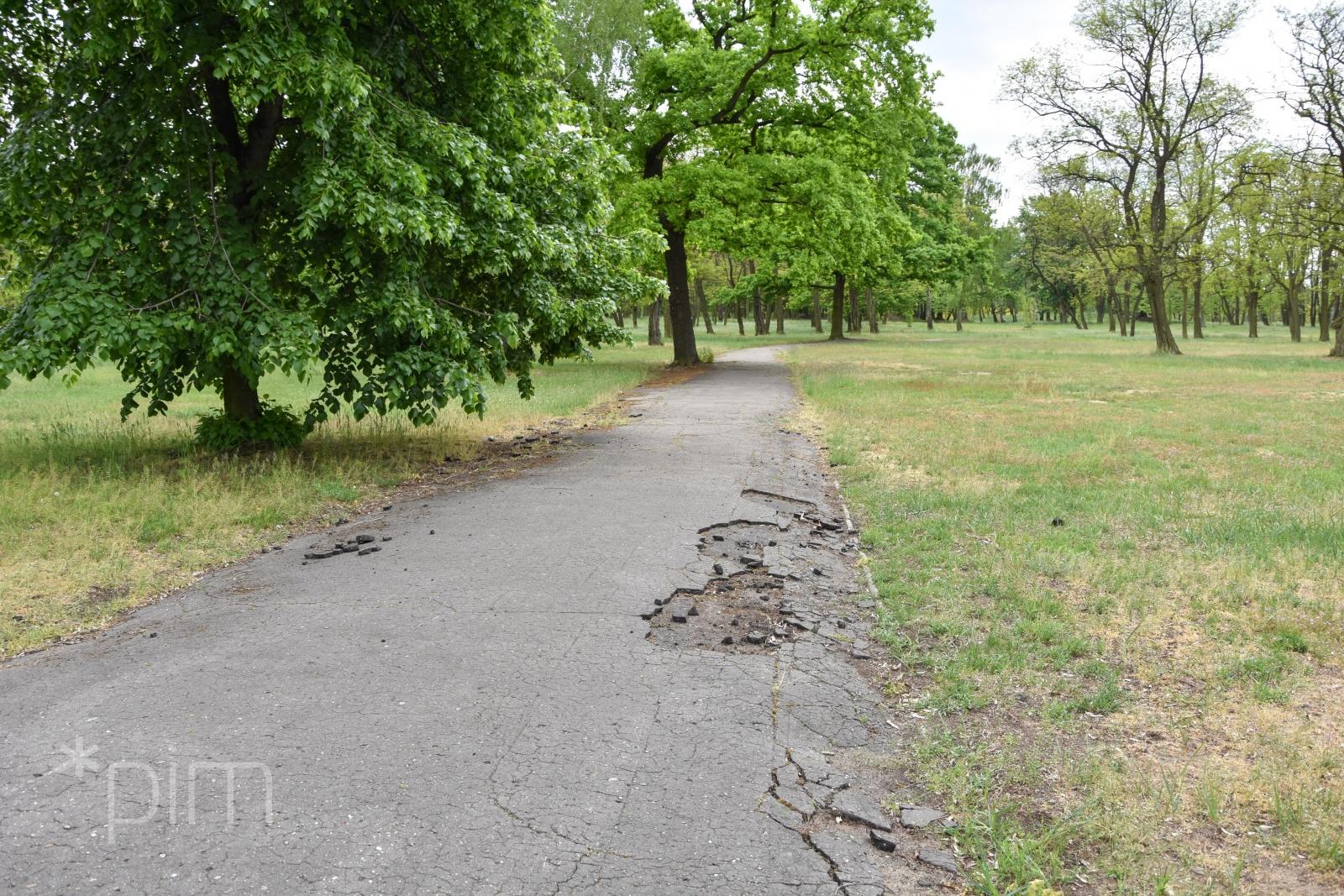 Mniej betonu, więcej zieleni – Park Tysiąclecia czeka rewitalizacja