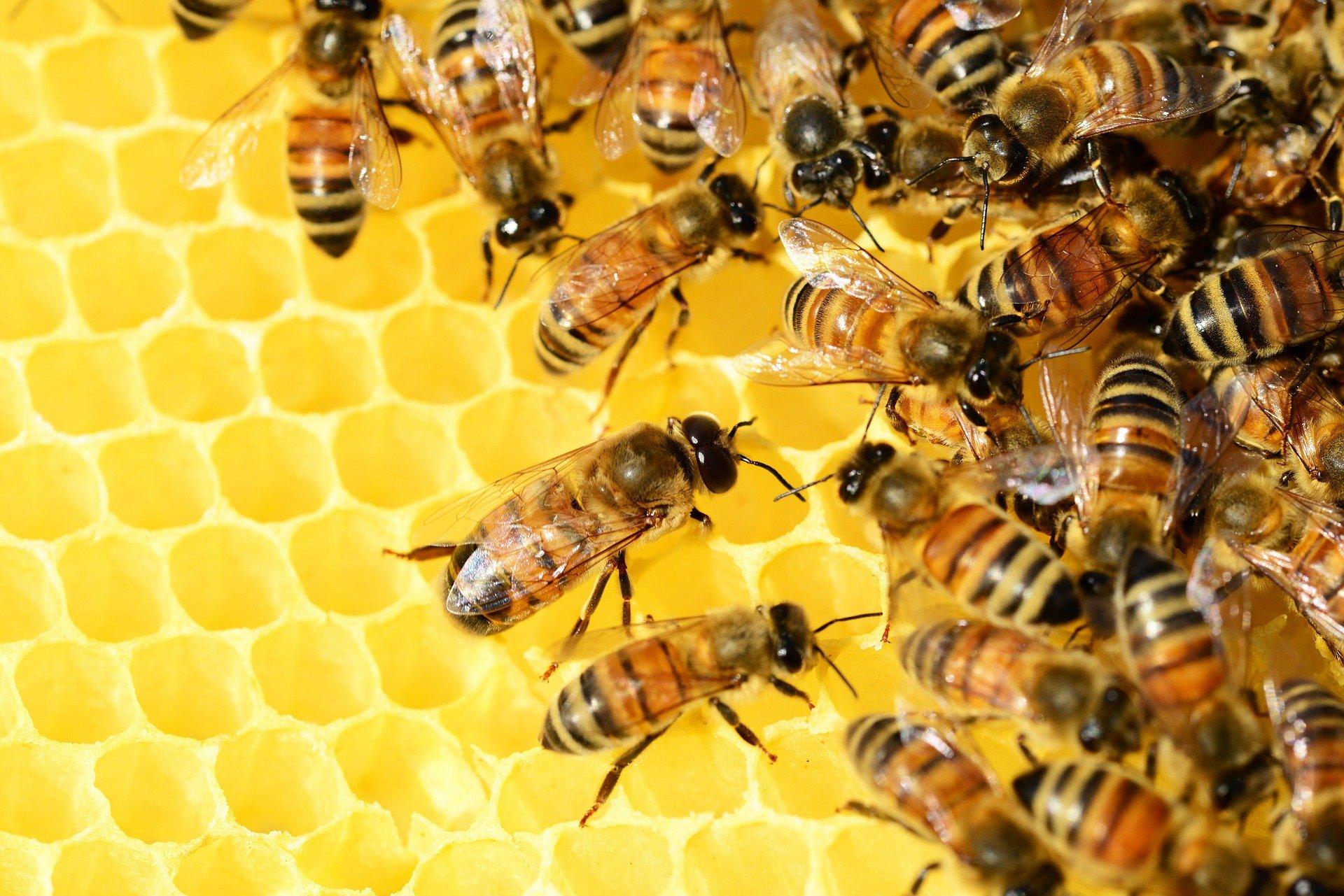 Ostatnie ciepłe dni mogą zaszkodzić wielkopolskim pszczołom