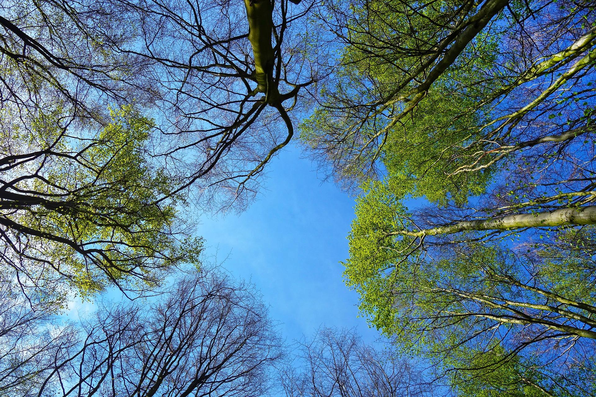Z Parku Szelągowskiego zniknie kilkadziesiąt drzew? Zagrażają dwóm rurociągom miejskim