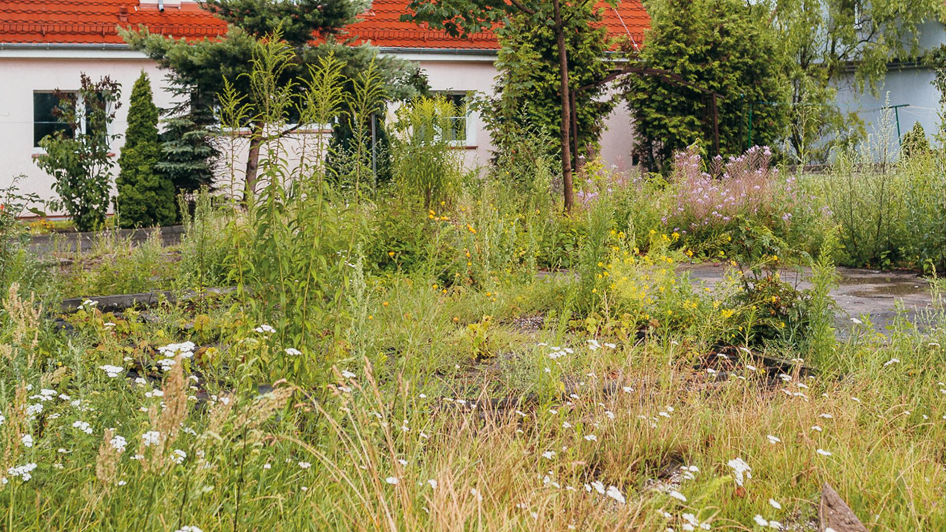Ogrody deszczowe, pasaże wodne, niecki bioretencyjne – Poznań chce wykorzystywać wodę opadową
