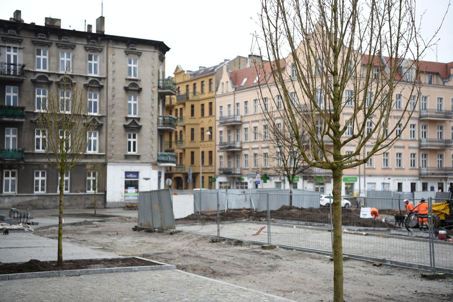 Pierwsze nowe rośliny już na przebudowywanym Rynku Łazarskim