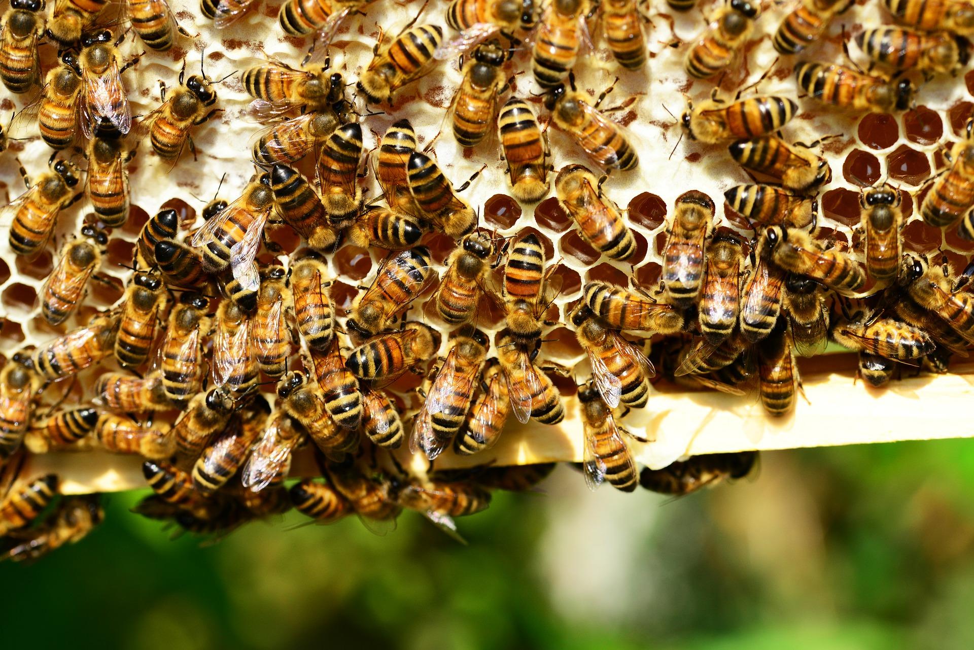 Pszczoły też potrzebują zbilansowanej diety