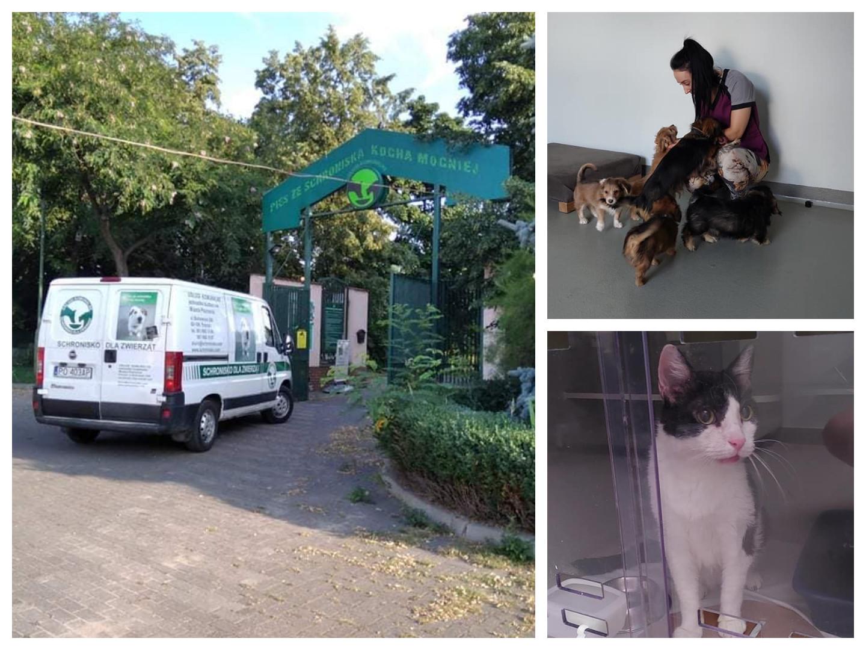 Ruszyła przeprowadzka psów i kotów do nowej siedziby schroniska dla zwierząt w Poznaniu