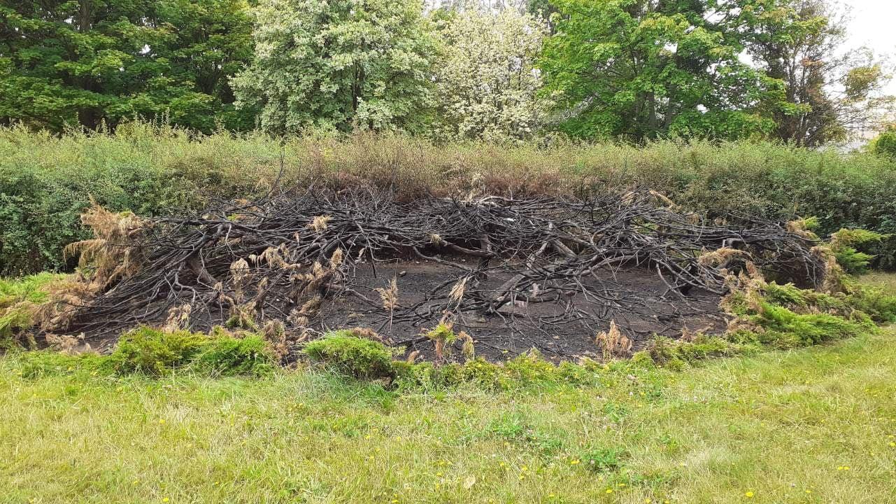 Ktoś podpalił krzewy w parku Czarneckiego. Zanim odrosną nowe minie wiele lat