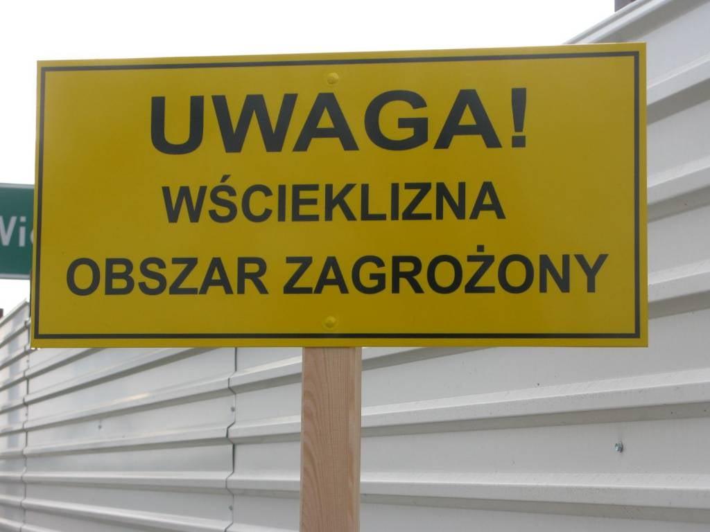 Wścieklizna w Poznaniu – wyznaczono obszary zagrożone. Co to oznacza?