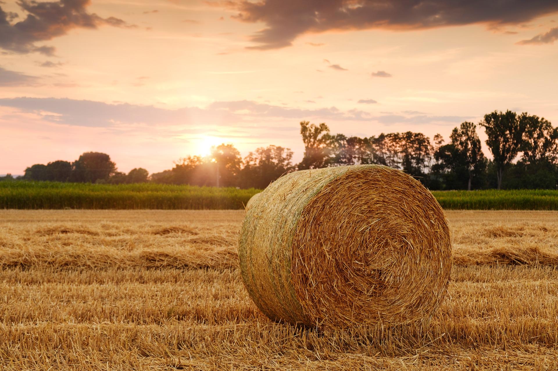 Wielkopolscy rolnicy czekają na ustalenia Polskiego Ładu dot. rolnictwa