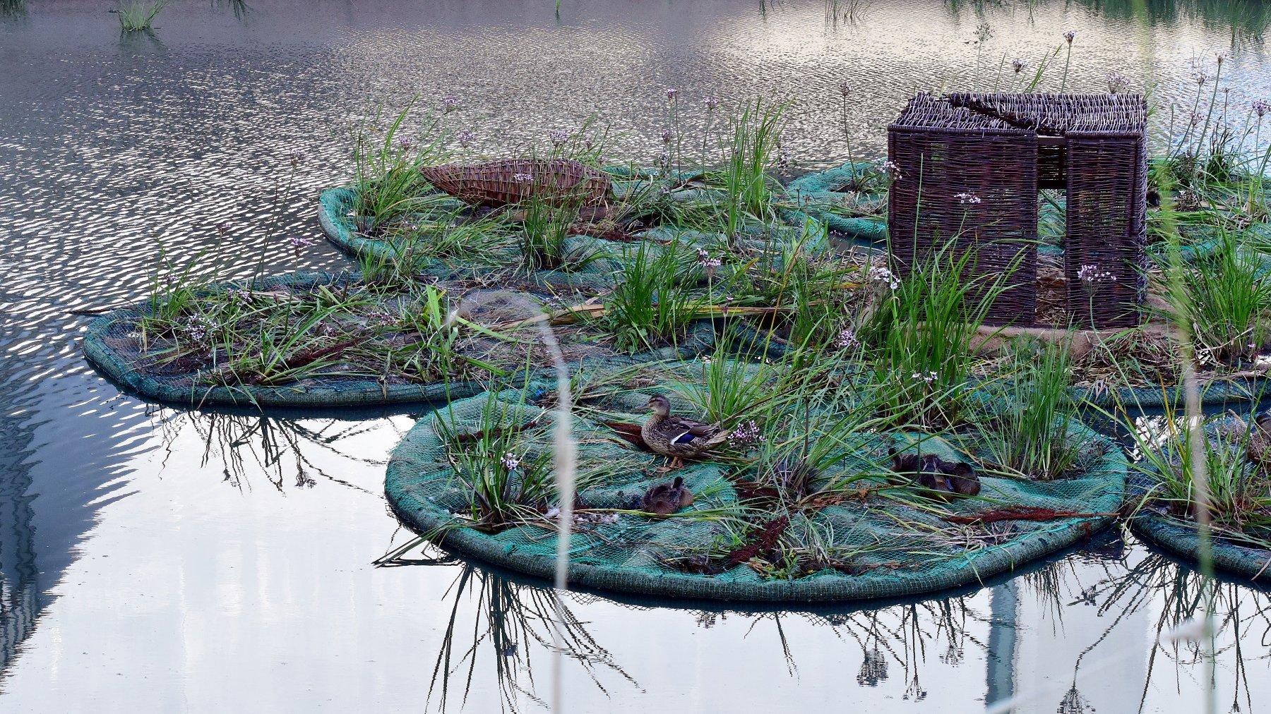 W poznańskich parkach pojawią się kolejne pływające ogrody