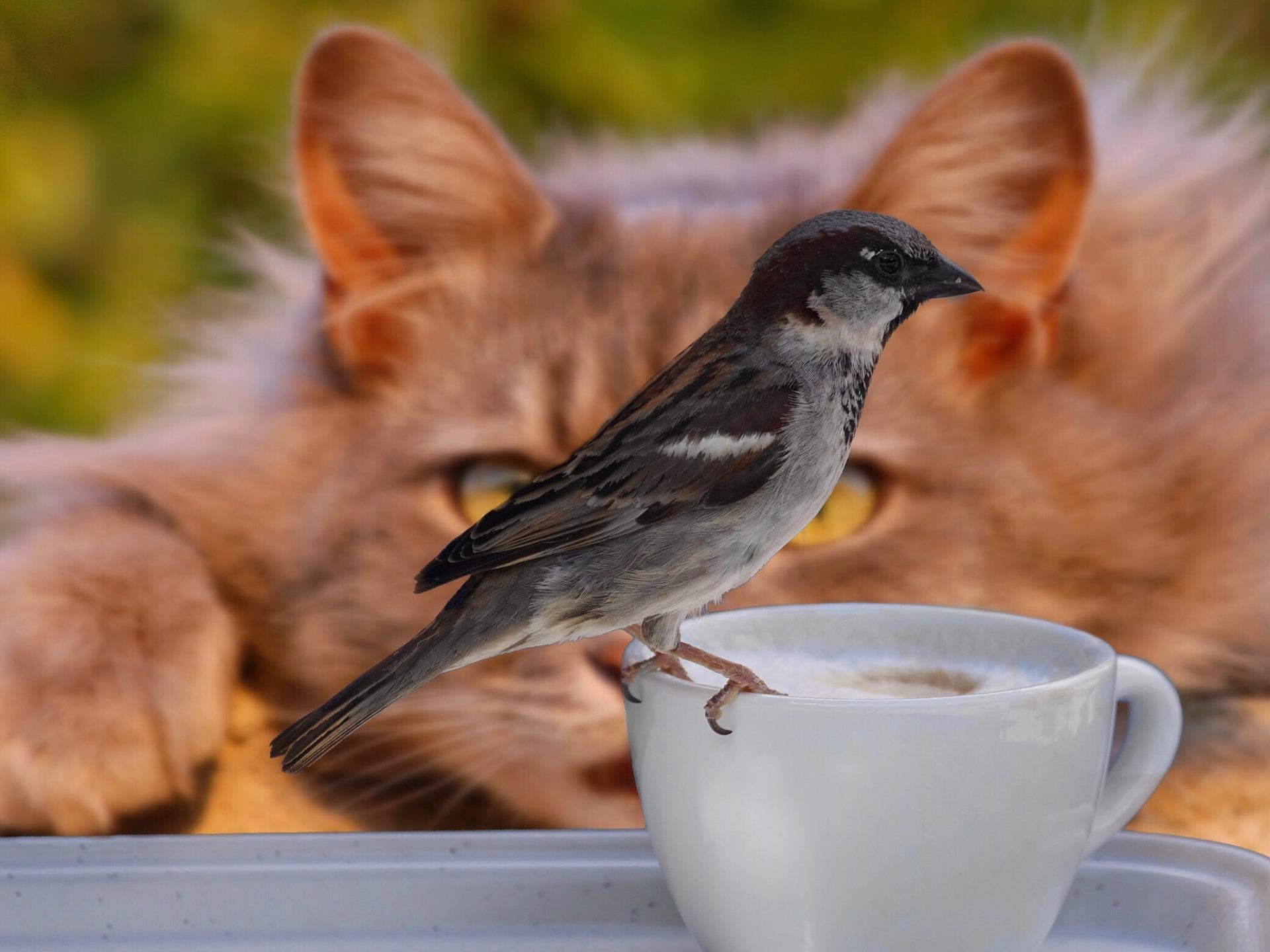 Kawa a zwierzęta, czyli przyrodnicza zaduma w Światowym Dniu Kawy